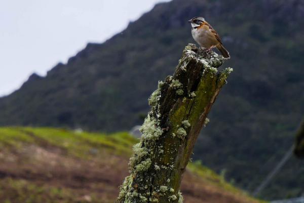 Mochuelo, territorio de biodiversidad