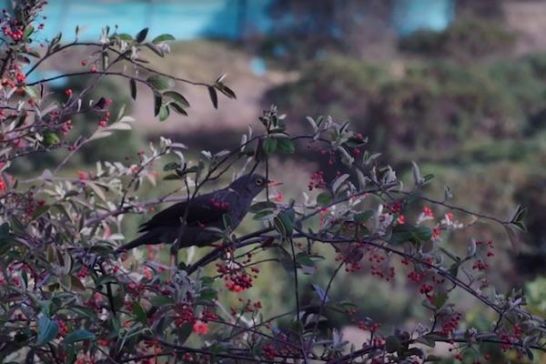 #Entérate Más de 30 especies de aves habitan las inmediaciones de Relleno Doña Juana