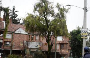 Conoce cómo se realiza la poda de árboles en Bogotá