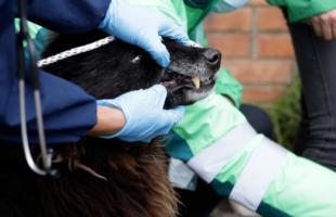 UAESP acompañó jornada de atención a animales en Mochuelo Bajo
